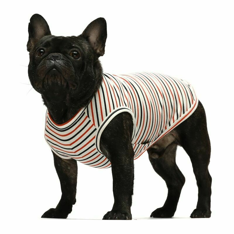 FW Dog Clothes Red/Blue Stripe XS