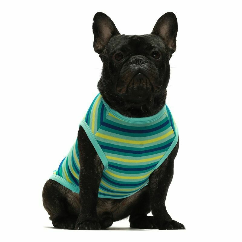 FW Dog Clothes Turquoise Stripe Small