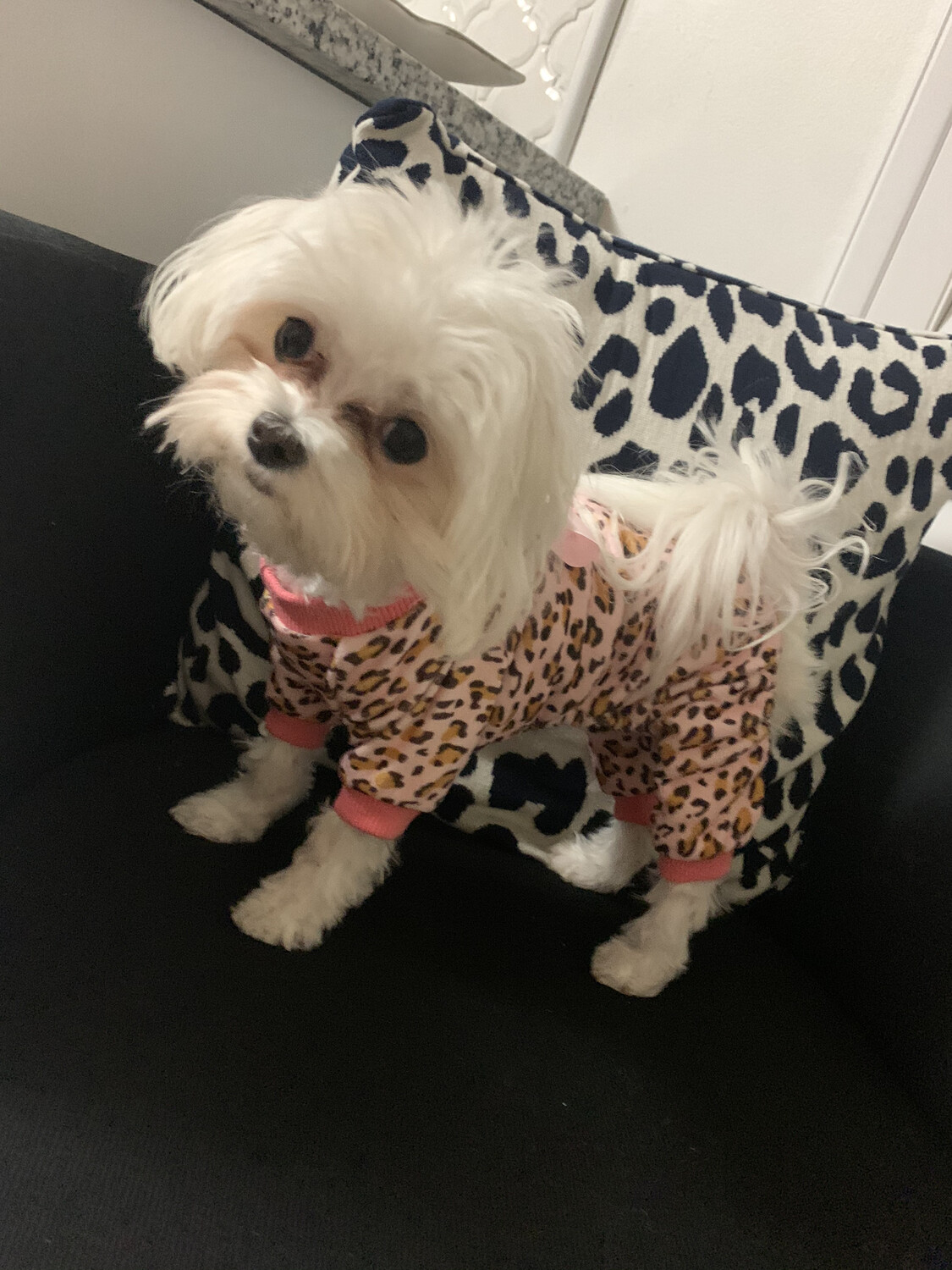 FW Dog Clothes Pink Leopard Large
