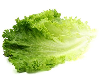 Jersey Green Leaf Lettuce