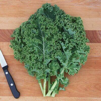 Jersey Kale