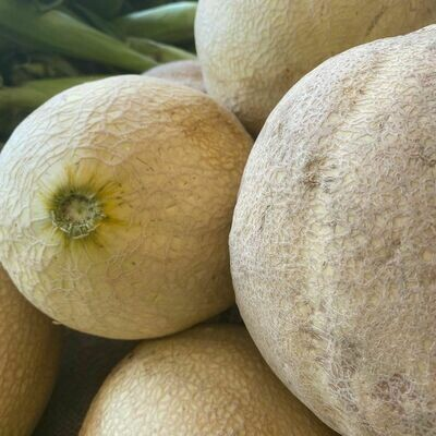 Jersey Cantaloupe