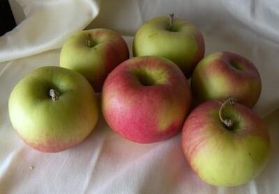 Jersey McIntosh Apples