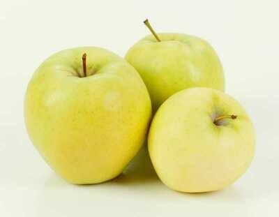 Jersey Blondie Apples