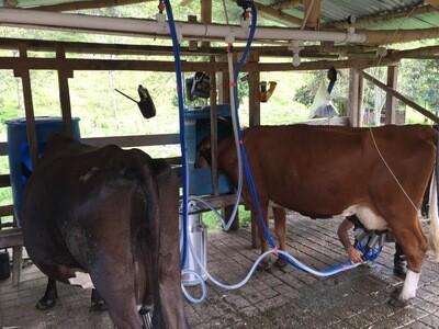 Equipo de Ordeño Fijo 1 y 2 puestos para vacas