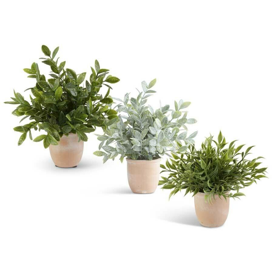 Herbs in Terracotta Pot - 3 Asst