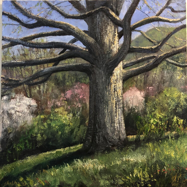 Grand Oak in Spring