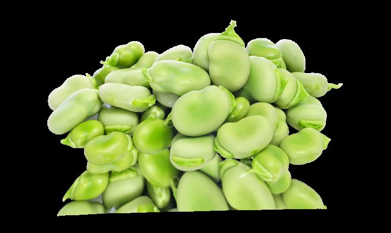 Heirloom Ford Hook Lima Bean (treated)-Individual Seed Pack