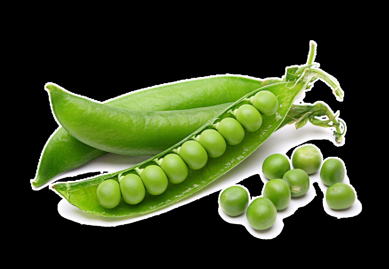 Heirloom English Knight Peas- Individual Seed Pack