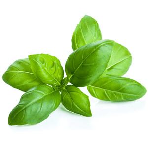 Heirloom Basil Herb - Individual Seed Pack