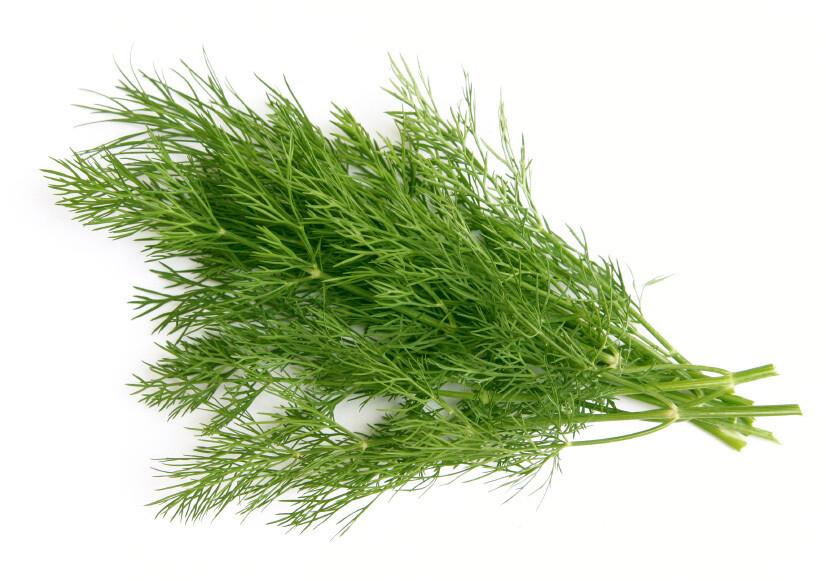 Heirloom Long Island Dill - Herb - Individual Seed Pack