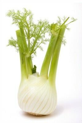 Heirloom Florence Fennel - Herb - Individual Seed Pack