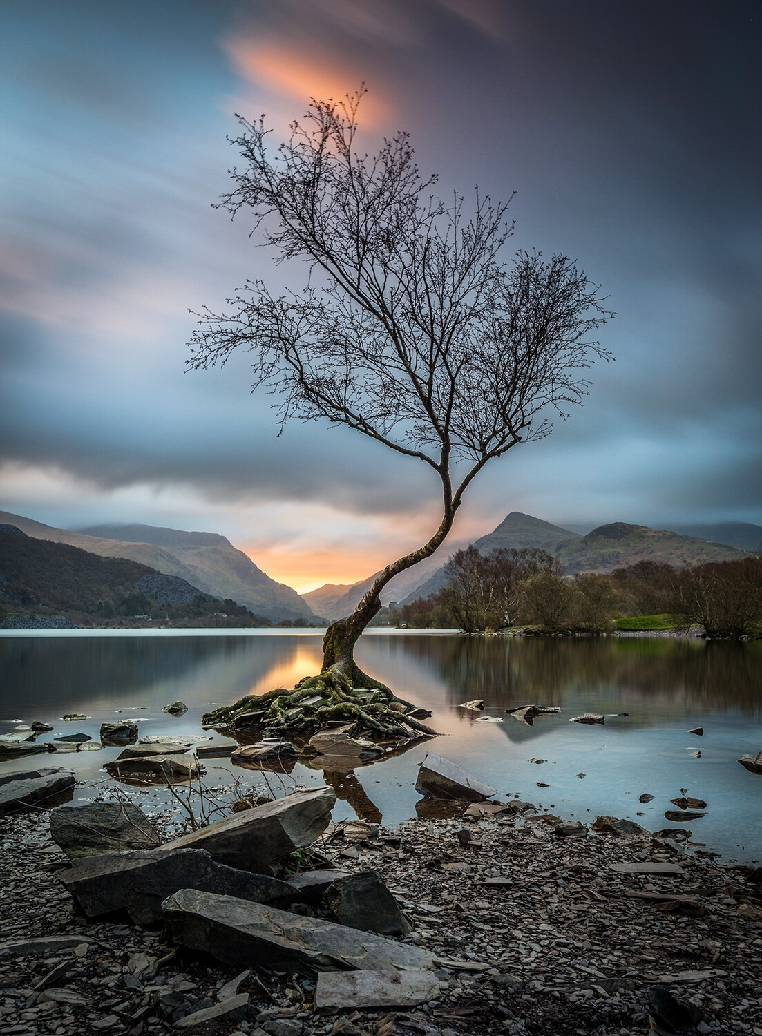The Lone Tree - Llyn Padarn - North Wales