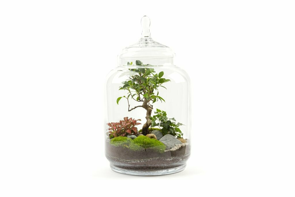 JUNGLE JAR  Dimensions : H 53cm x D 30cm