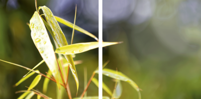 Bambus Diptychon