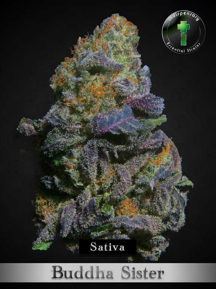 Buddha Sister (Sativa)