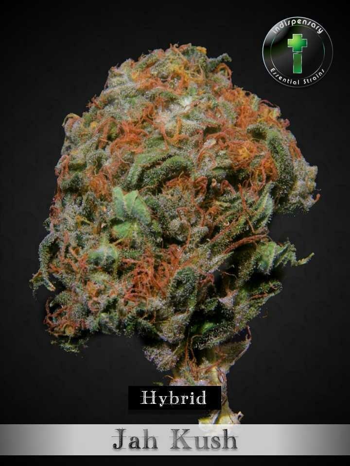 Jah Kush (Hybrid)