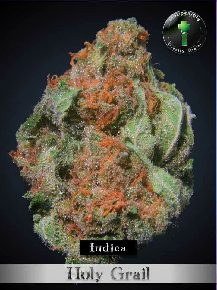 Holy Grail (Indica)