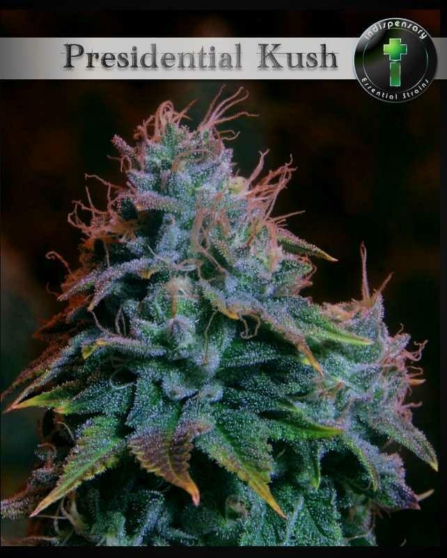 Presidential Kush aka Godfather O.G. (Indica)
