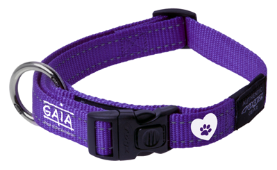 dog collar 'Adopted & adored'
