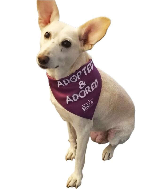 dog bandana 'Adopted & adored'