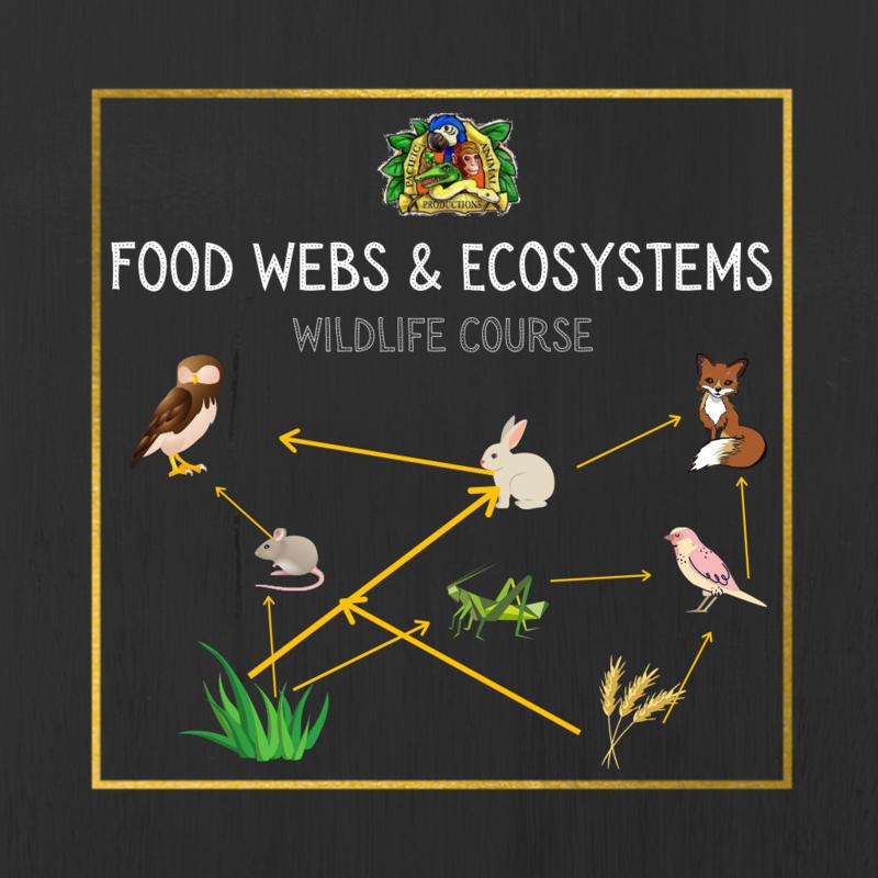 Wildlife Course: Animal Food Webs & Ecosystems