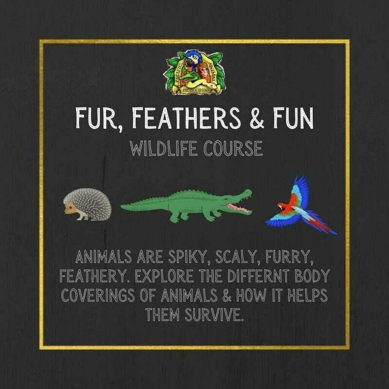 Wildlife Course: Fur, Feathers & Fun
