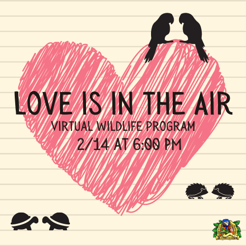 Love is in the Air - Virtual Family Wildlife Program