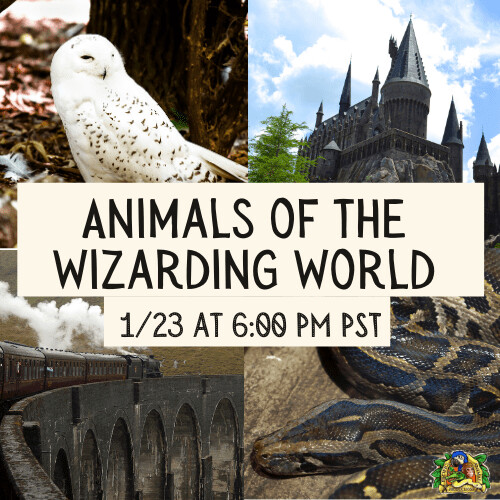 Animals of the Wizarding World - Virtual Family Wildlife Program