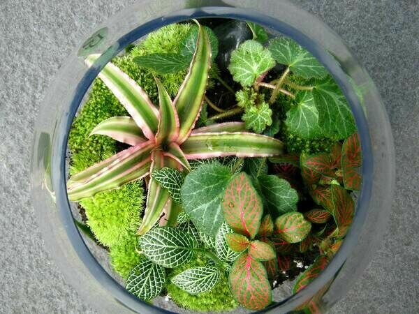 Green Terrariums
