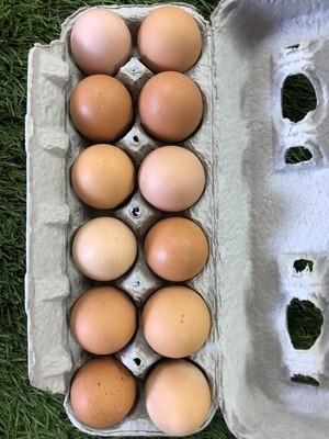 Farm Fresh Eggs, NJ local