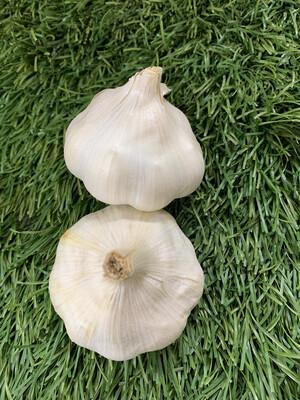 Garlic head