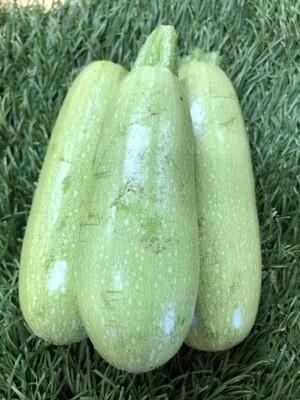 Zucchini - Light Green, Hlubik's