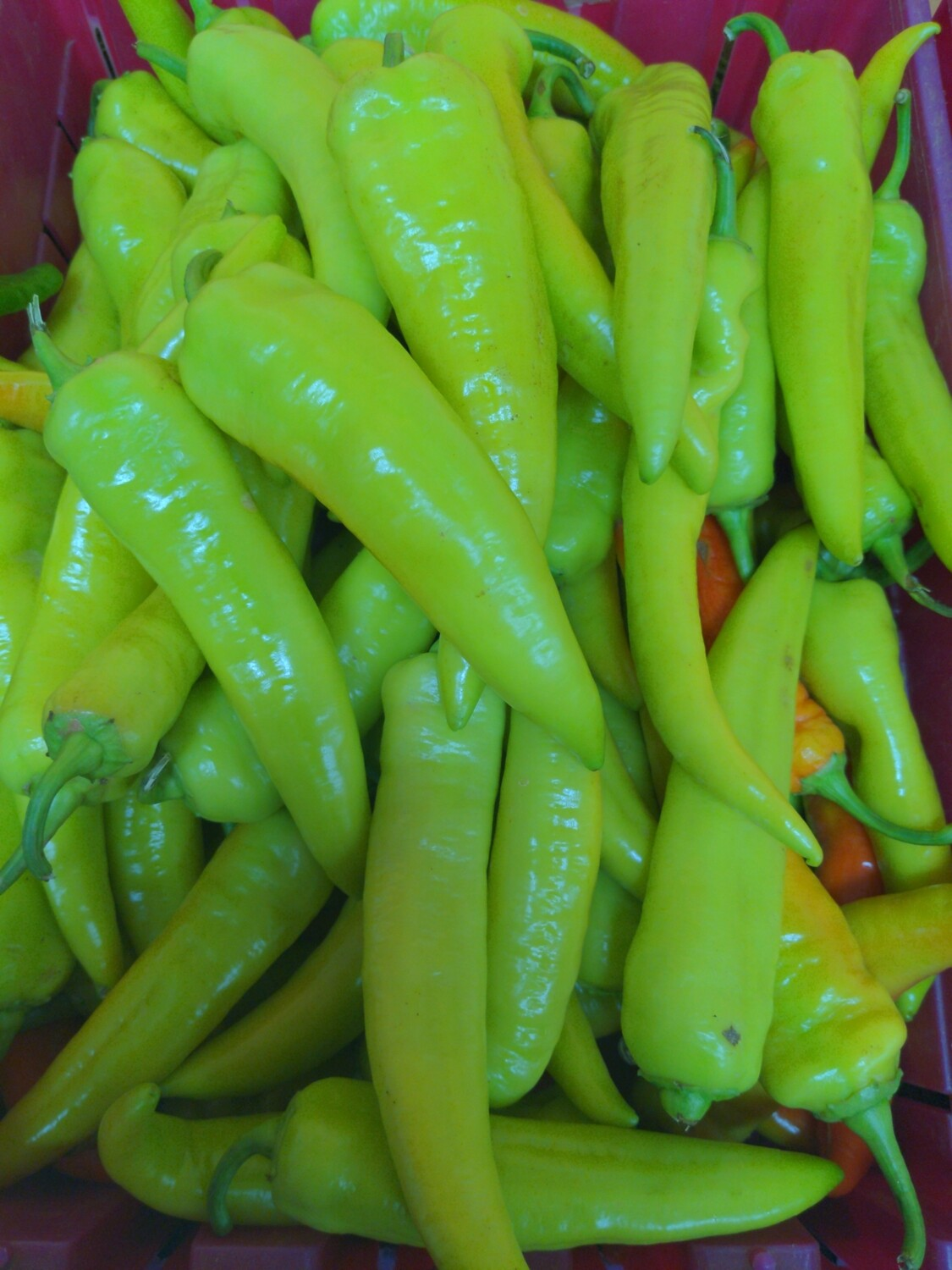 Peppers-long hots, Hlubik's