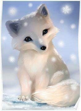 Bady Fox in Winter