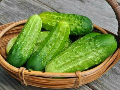 Pickling cucumbers from TerraStay Farm (1 lb)
