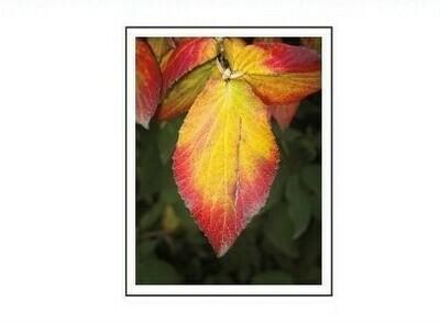 (10) Leaf Cards