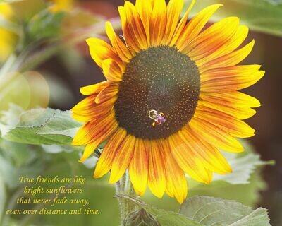 True Friends Sunflower 8x10 Photo