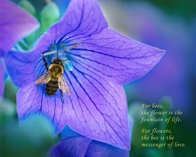 The Flower & the Bee 8x10 Photo