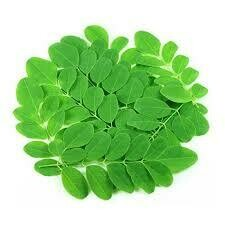 Drumstick Leaf Bunch