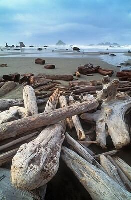 *PREORDER* Oregon Coast Driftwood Decor