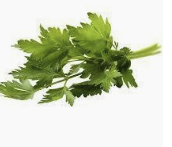 PARSLEY, FLAT LEAF (1 BUNCH)