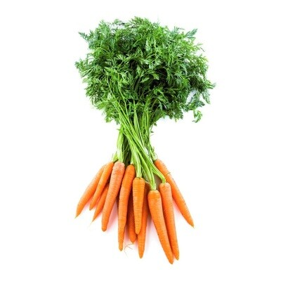 Dutch Carrot