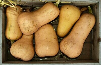Butternut Large each