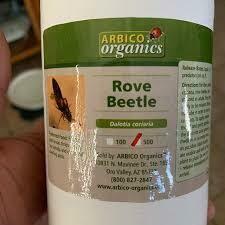 Arbico Rove Beetles