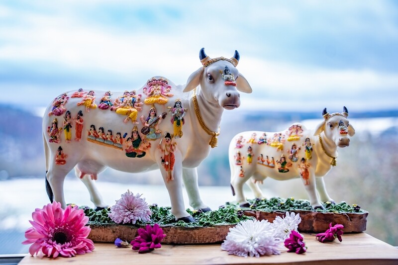 'Kamadhenu Cow' Decorative Statue