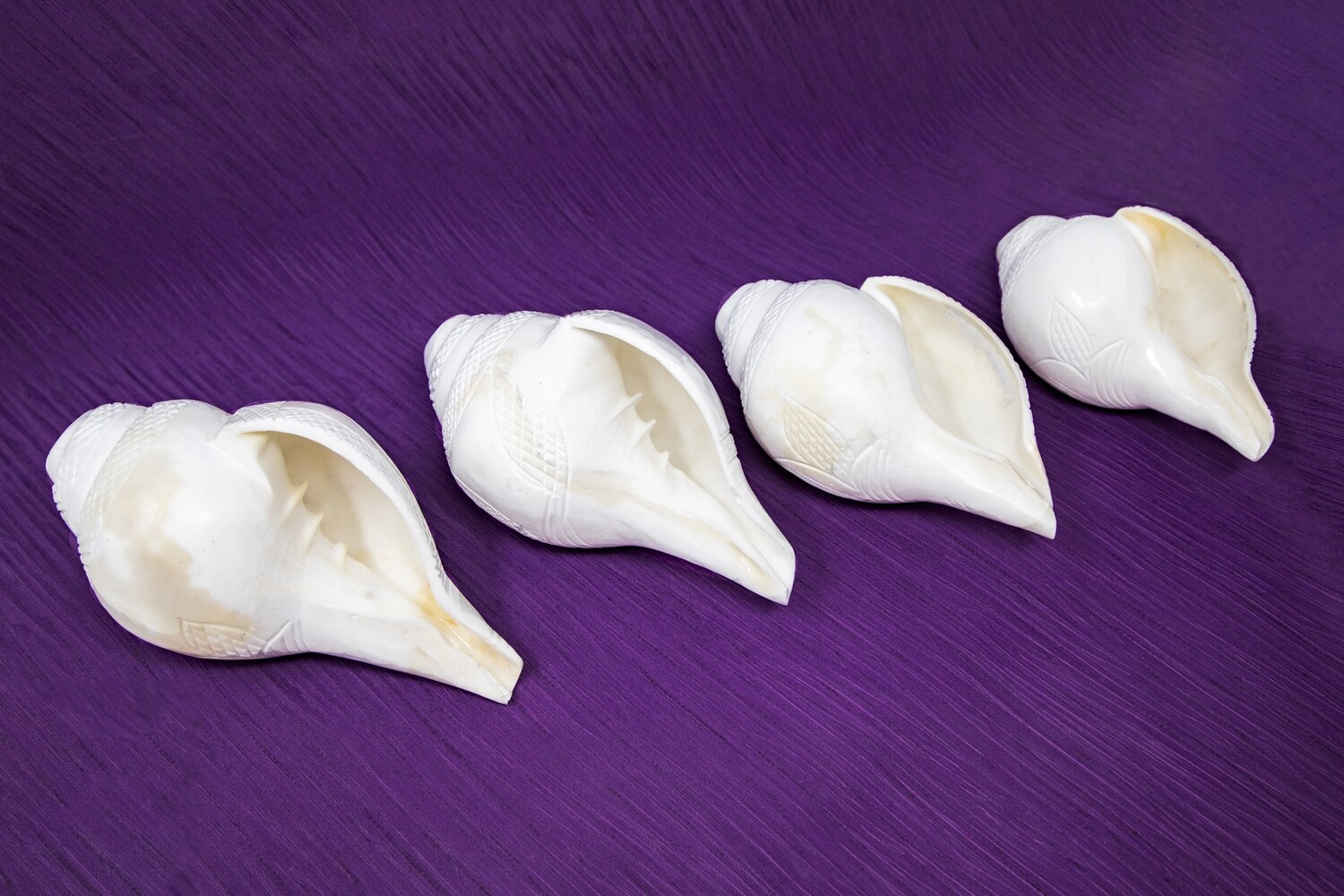 Blowing Conch / Shankha, Right hand