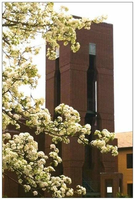 Postcards - Hazen Bell Tower