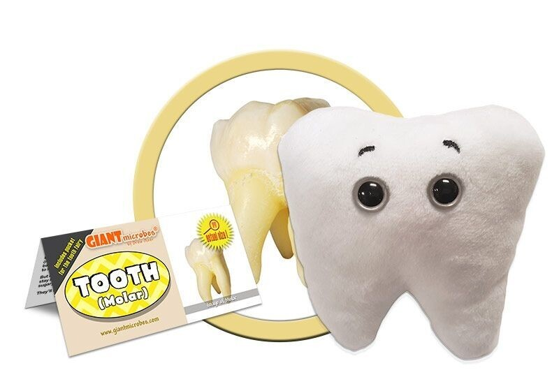 Giant M Toy - Tooth