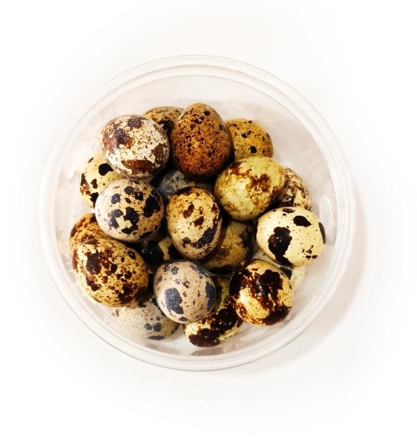 Huevos de Codorniz 20 Unidades